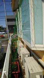 DSC_0224(1)